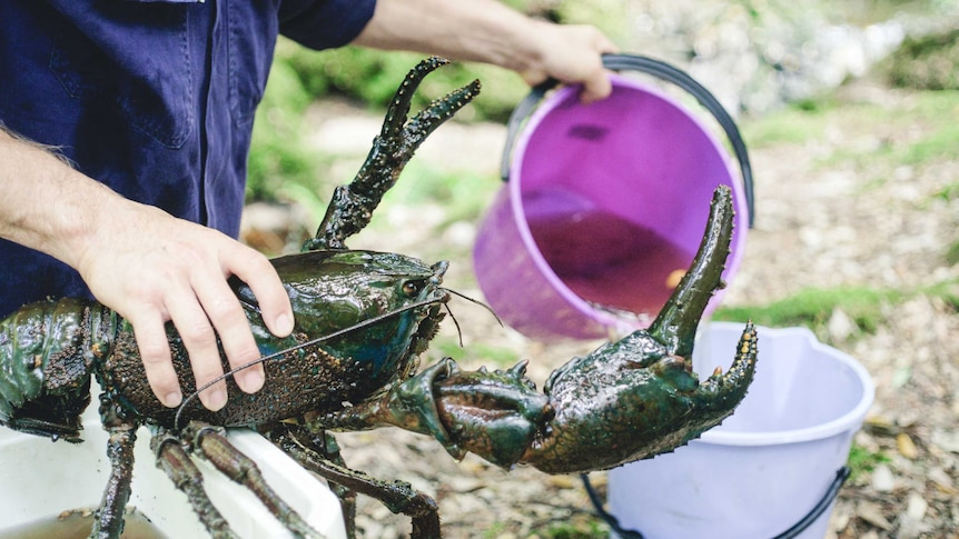 A freshwater crayfish caught during bioblitz