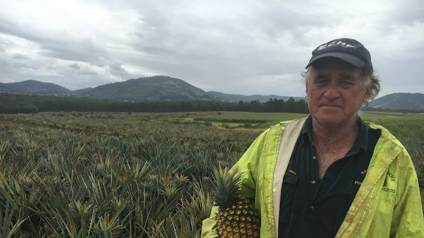 Peter Buchanan holds a pineapple, standing in front of a field with a grim look on his face.