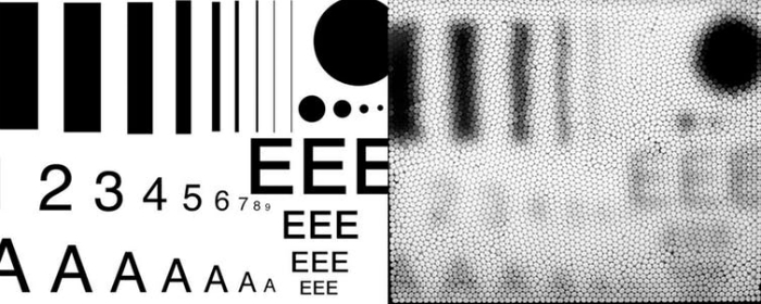 How we see fine detail with our eyes, and how a bee camera views the same info.