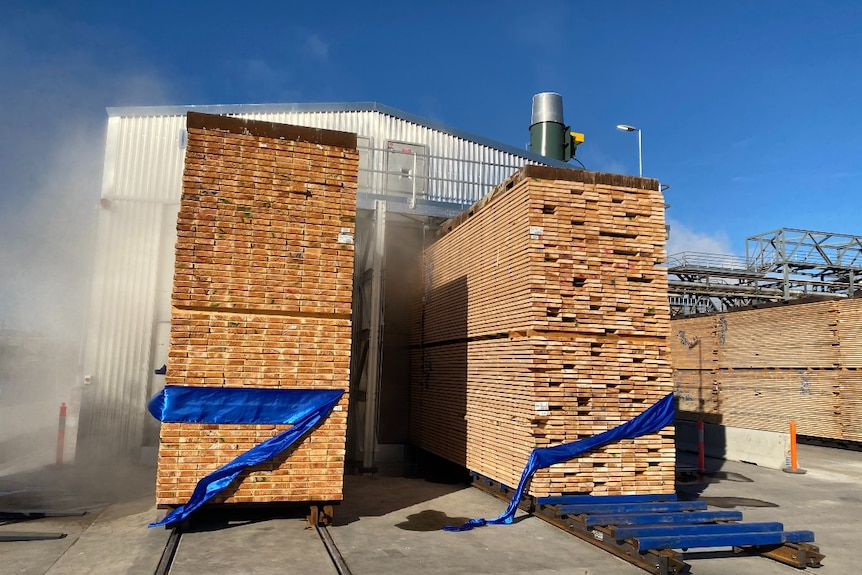 Milled timber is stacked neatly and steaming, outside a large kiln shed