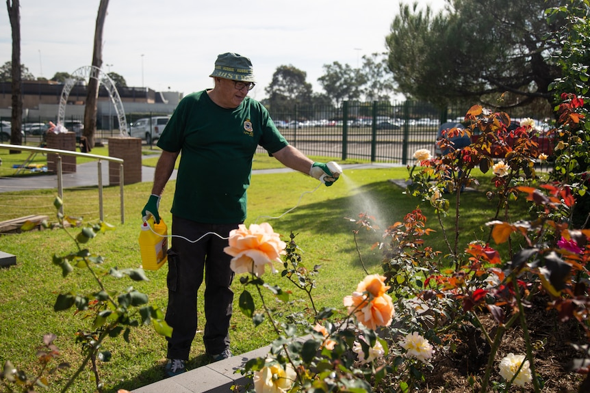 a an holding a hose with spraying out of it onto a bed of flowers