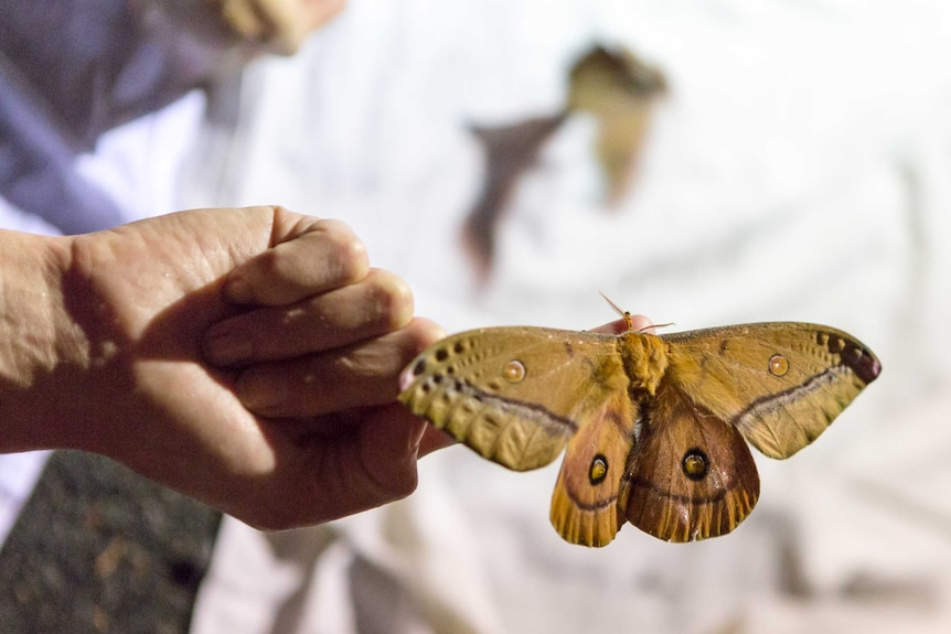 A suite of moths were found in the Bioblitz