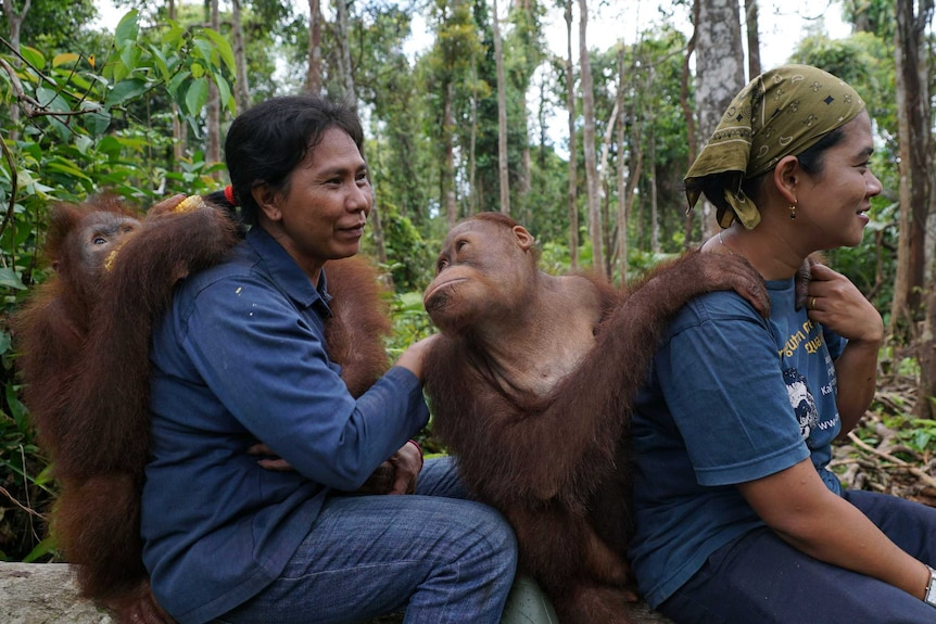 Young orangutans sitting on a log with two staff members of the Orangutan Foundation International