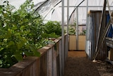 The North Gregory Hotel's aquaponics system is made from recycled materials.