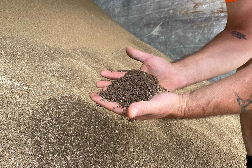 A man outstretched hands, holding fertiliser pellets that have been taken from a huge mound in front of him
