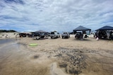 People swimming alongside parked 4WD vehicles and gazebos on the beach at Bribie Island.