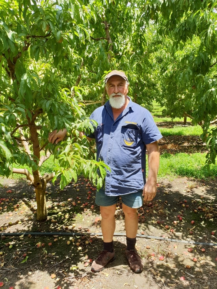 Stone fruit grower Dino Cerrachi in his stone fruit orchard.
