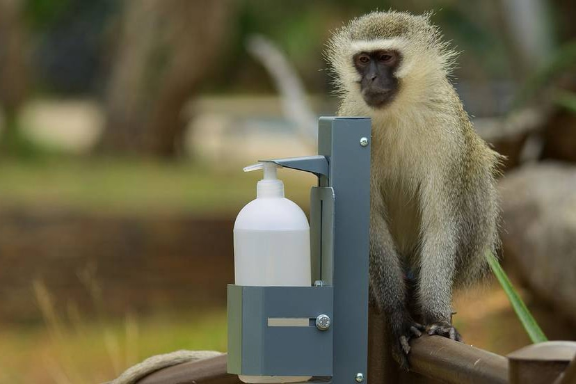 A film still of a vervet monkey sitting near hand sanitiser from The Year Earth Changed