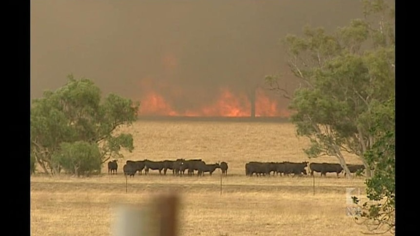 Rainfall threatens large scale bushfires