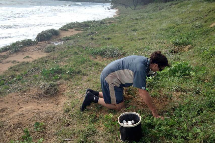 Rangers relocate turtle nests ahead of Tropical Cyclone Marcia