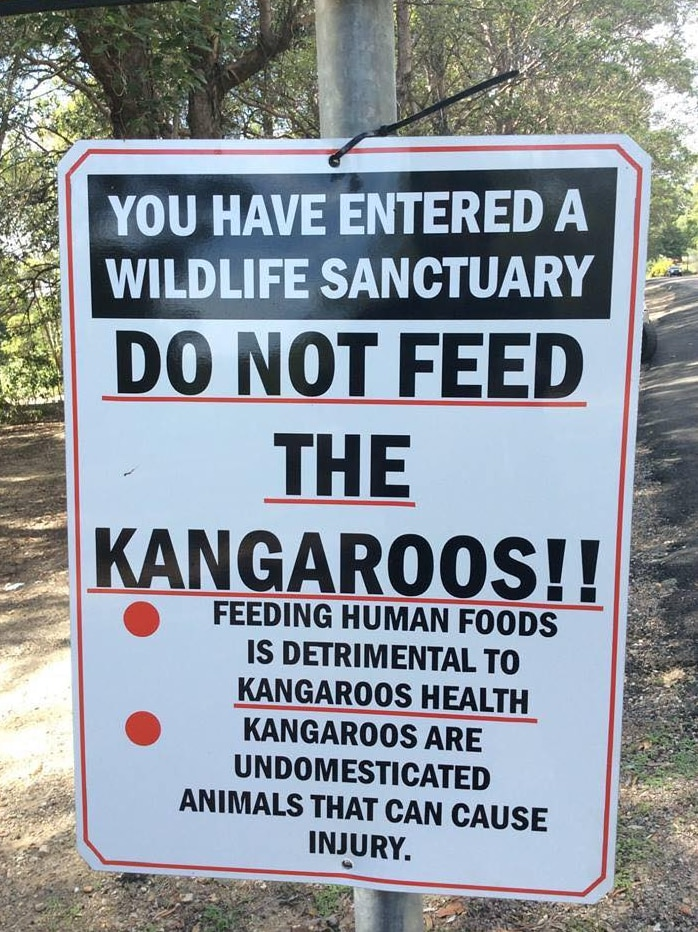 A sign says in big capital letters DO NOT FEED THE KANGAROOS!!
