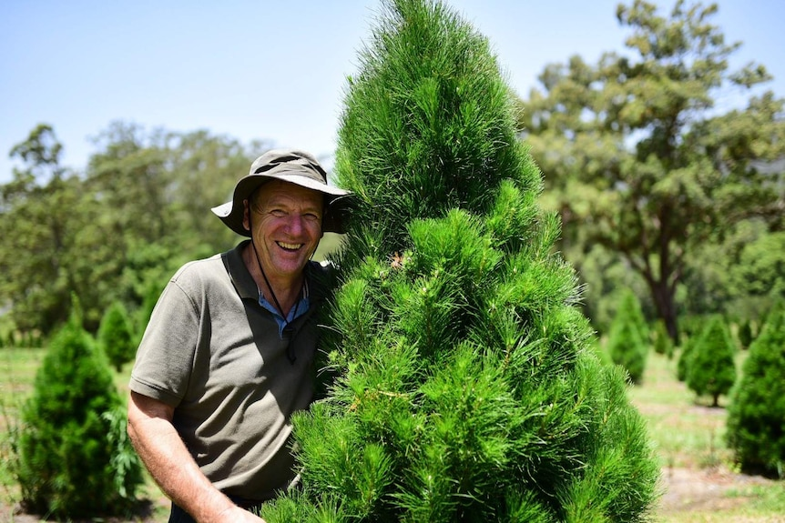 Male farmer standing next to a pine tree