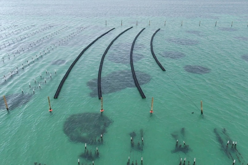 Aerial picture of water with four lengthy black lines showing the floating farming system