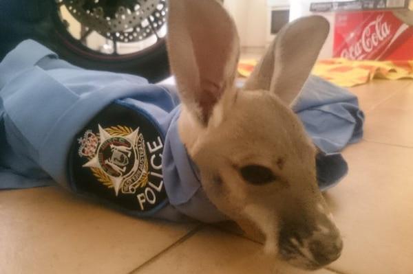 Cuejo, joey in police uniform.