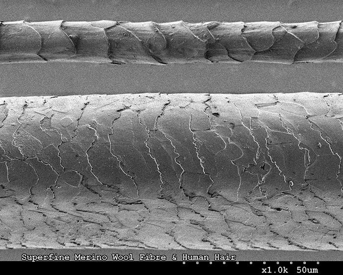 Microscopic image of wool and human hair