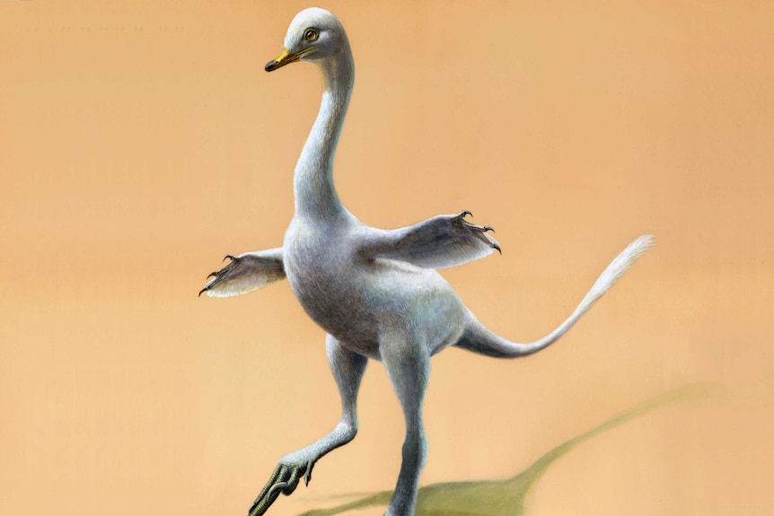 Artist's impression of a white duck dinosaur with small bill, clawed flippers outstretched, long thin tail, and clawed feet.