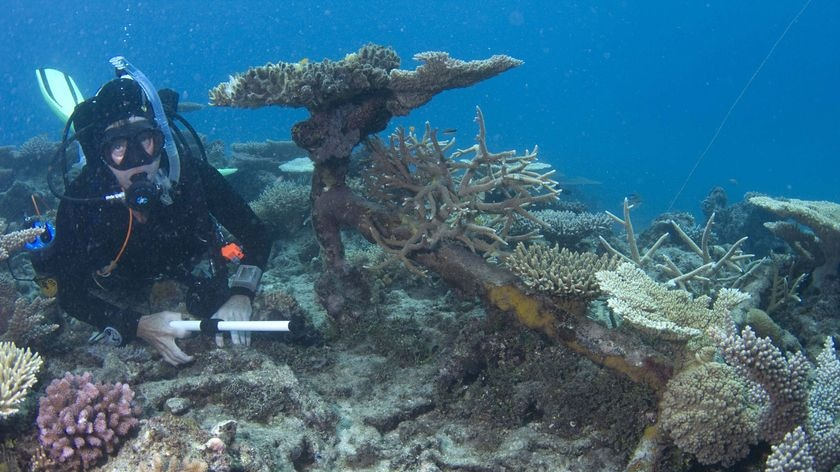 The Government ship sank in 1829, south of Cairns.