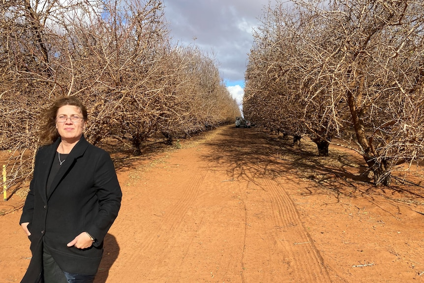 Woman stands in the middle of almond trees with red dirt underfoot.