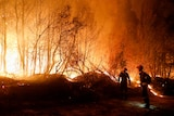 Two firefighters stand in front of a raging fire at night in a wooded area.