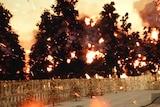Fire engulfs bushland.