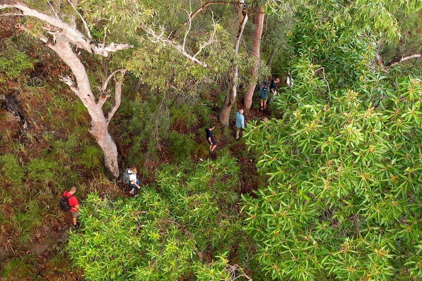 An aerial view of people walking down a track in the bush.