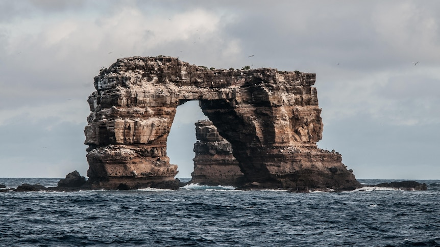 Darwin's Arch off Galapagos Islands collapses into Pacific Ocean – ABC News