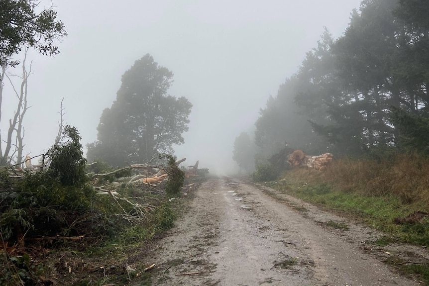 foggy road with fallen trees to the side