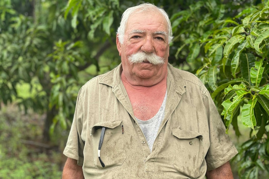 Golden Mango Orchards owner Francesco Ignello stands in an orchid.