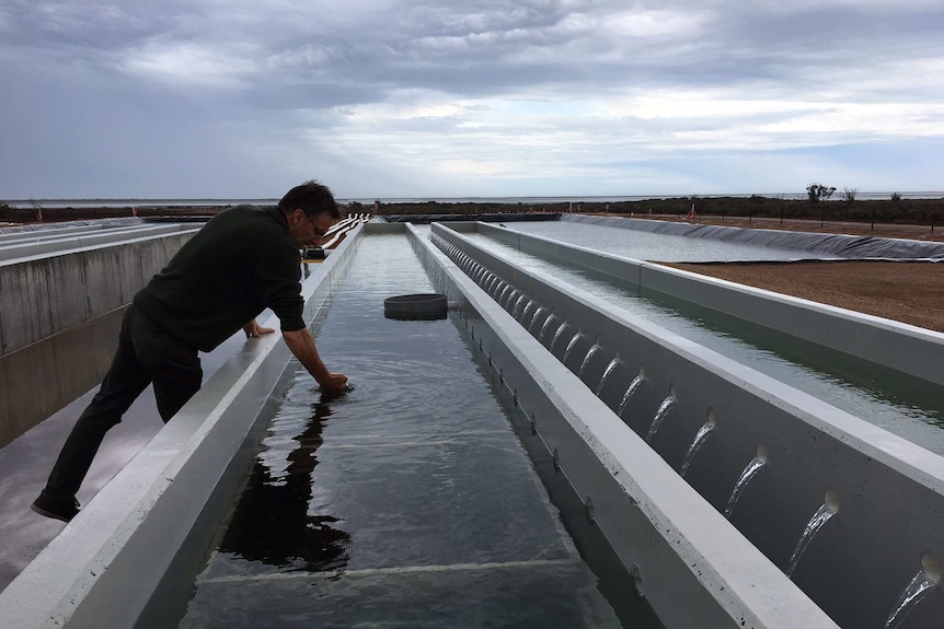 Greg Bowers at the new Cowell oyster facility.