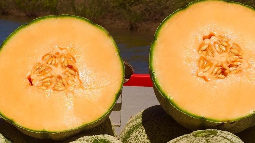 A rockmelon, cut in half, showing the inside.