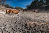 A dry, cracked river bed on the Darling River downstream of the Bourke weir.