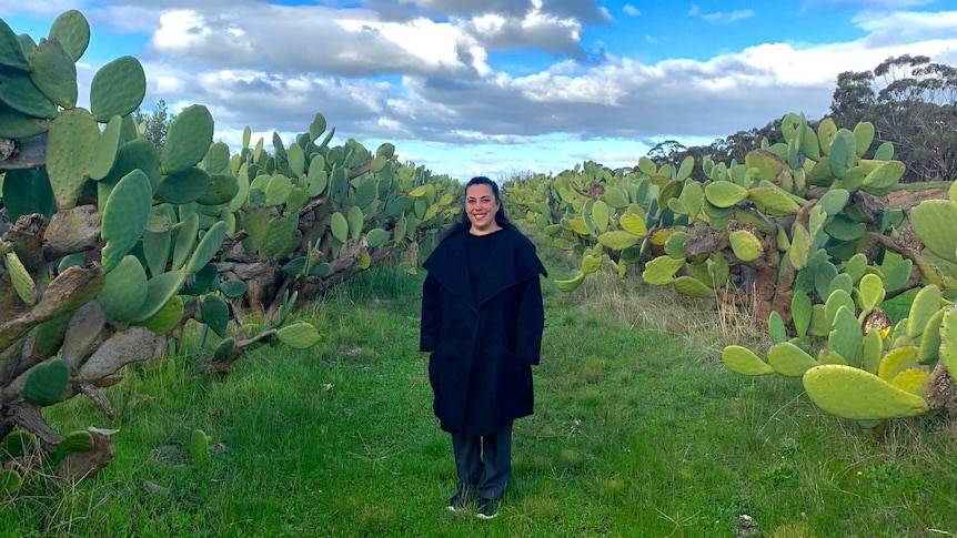 A woman in black is standing in a field with hundreds of green cactus plants