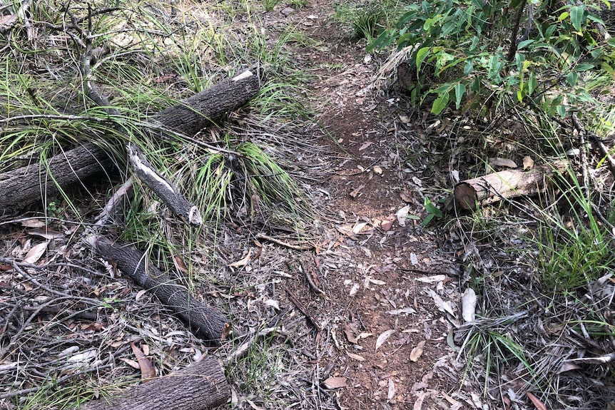 A dirt trail at Toohey Forest surrounded by vegetation, with logs that were once blocking the track cut with saws.