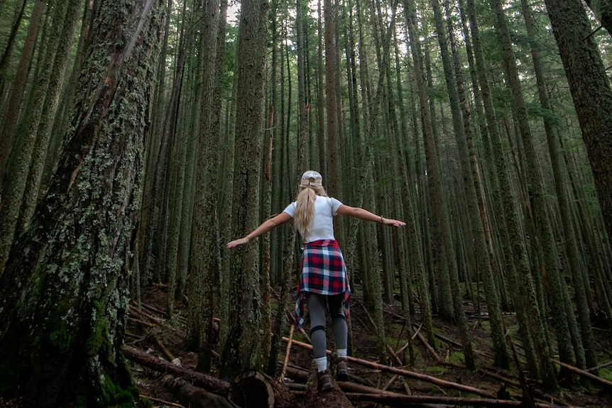 A woman walks through a forest of tall trees