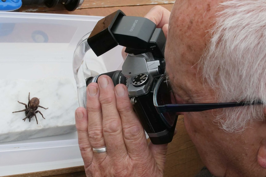 Close shot of a man with short silver hair leaning in close with his camera to photograph a large spider in a container