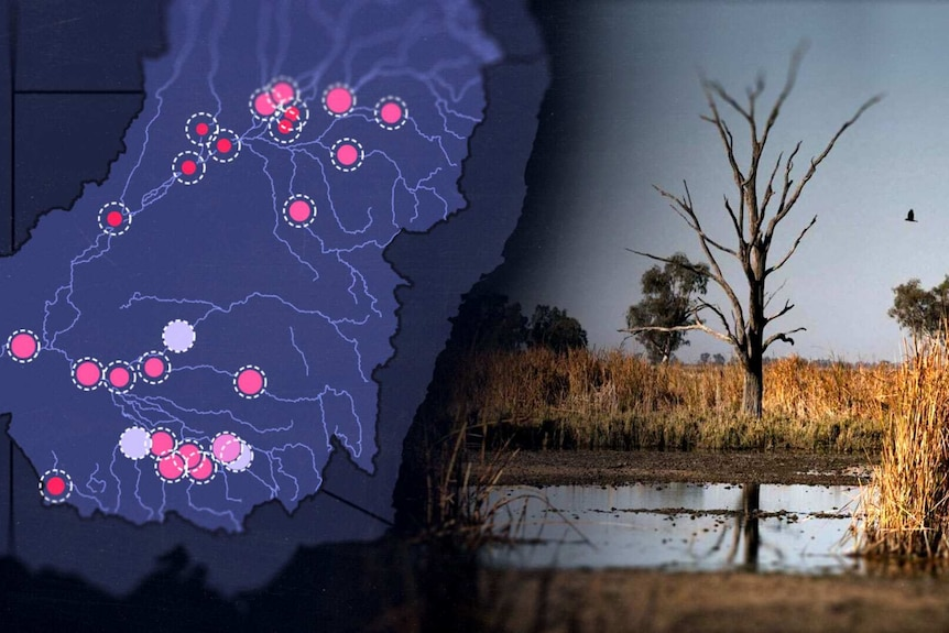 Scientists identify 'huge discrepancies' in water flows in the Murray-Darling Basin