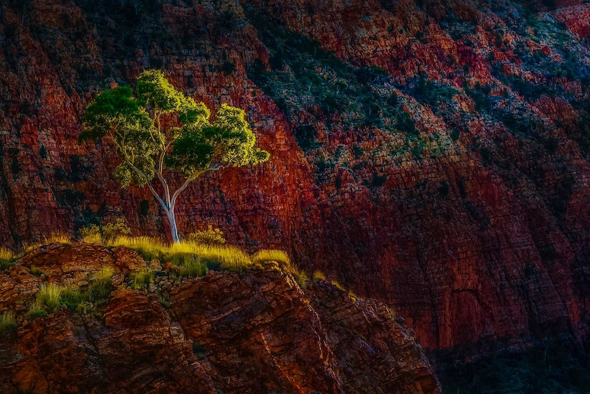 First light hits a tree in a gorge in the NT.