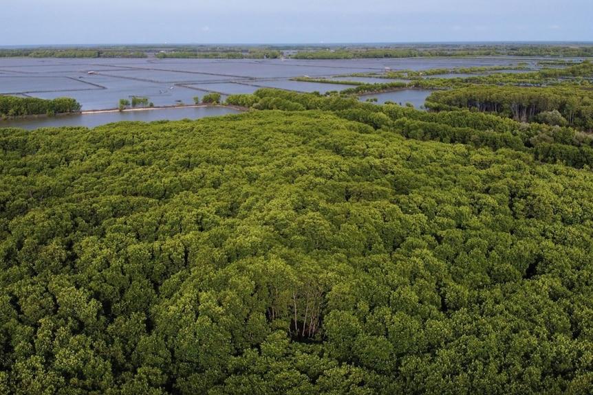 Area yang ditanami pohon mangrove
