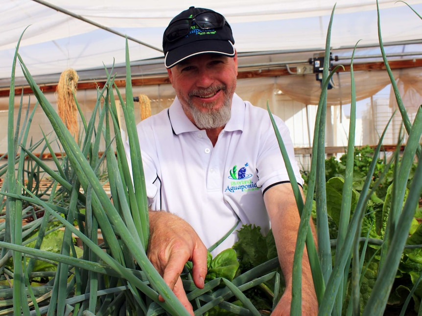 Max Gray looking a across some spring onions in a hot house