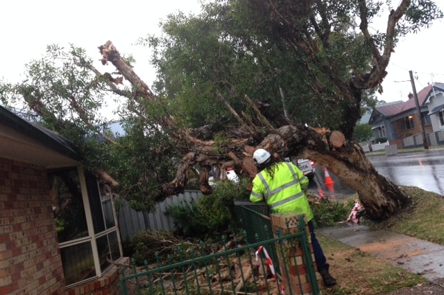 A Newcastle council crew works to remove a tree that was blown onto a house in Georgetown during yesterday's storm.