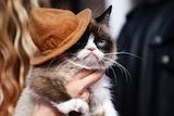A grumpy-faced cat wearing a small leather hat.