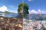 Scientists predict the world's a mass coral bleaching event will take place in early 2016