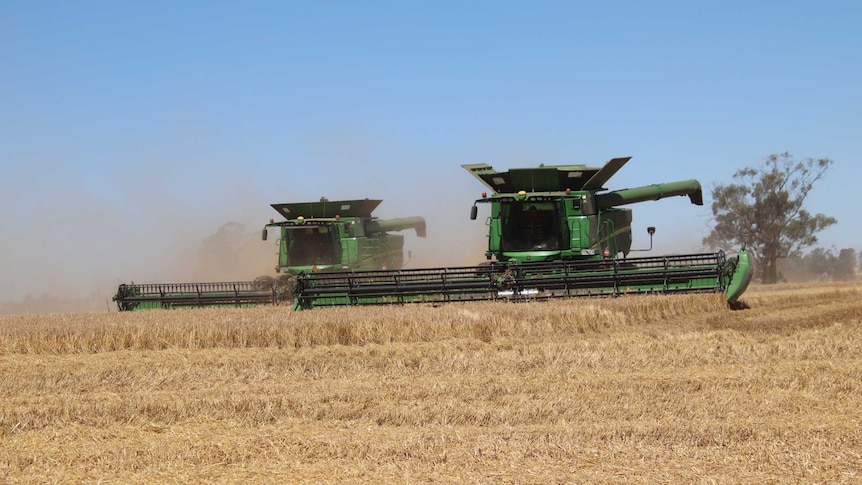 Play Audio. WA grains industry urgently needs 1, 000 workers to get the crop off. Duration: 5 minutes 23 seconds