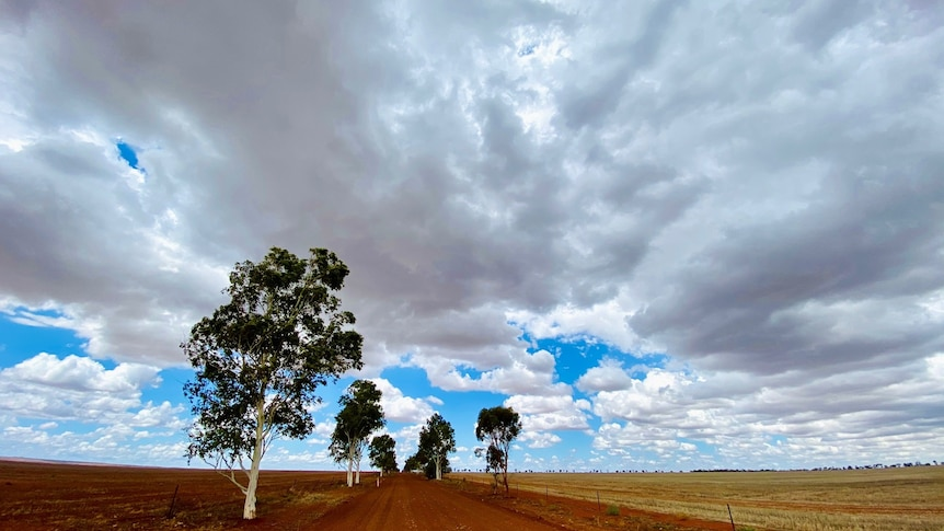 A red dirt road with a large tree, the sky is blue with white clouds