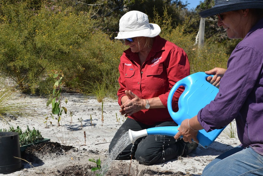 Sabrina Hahn and Sylvia Leighton water in a new banksia seedling in a sand patch on her farm.