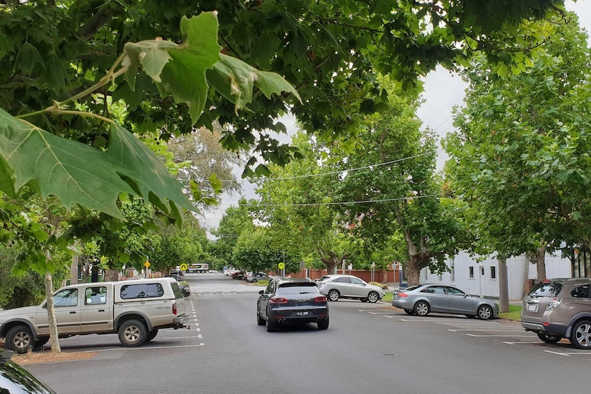 A number of large green trees hand over a suburban street in South Melbourne.