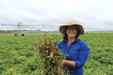 Irrigator Sarah Ciesiolka with a peanut crop.