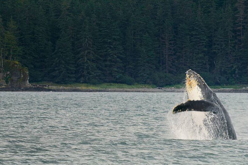A film still of a whale emerging from the sea from The Year Earth Changed