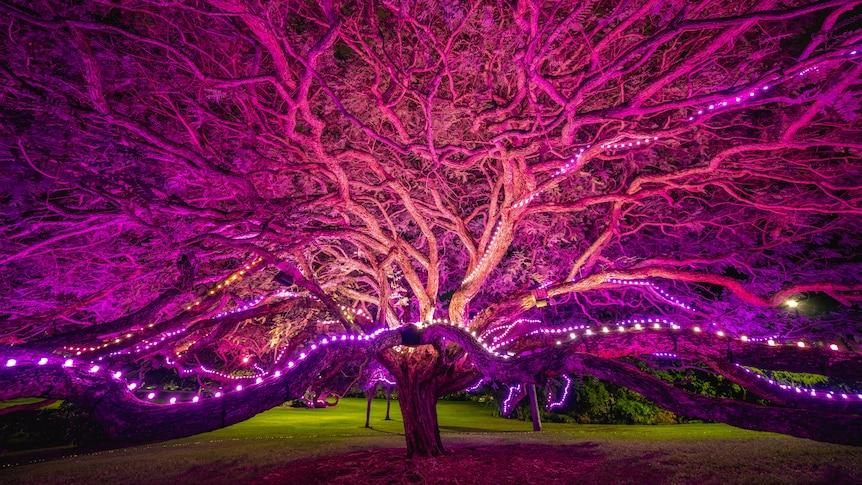 Outdoor public art festival lights turn Brisbane botanic gardens into a gallery