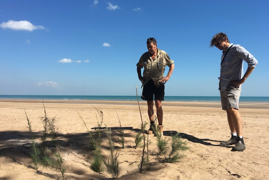 Two men look down at a circle of casuarina branches poked into the sand, in a tribute to Dr Yunupingu.